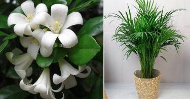 Quelles Plantes Pour Passer Une Bonne Nuit?