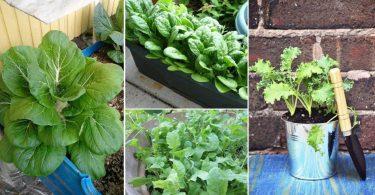 5 légumes verts asiatiques à faire pousser en automne