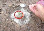 8 utilisations du bicarbonate de soude dans le jardin