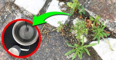 Comment se débarrasser des mauvaises herbes ?