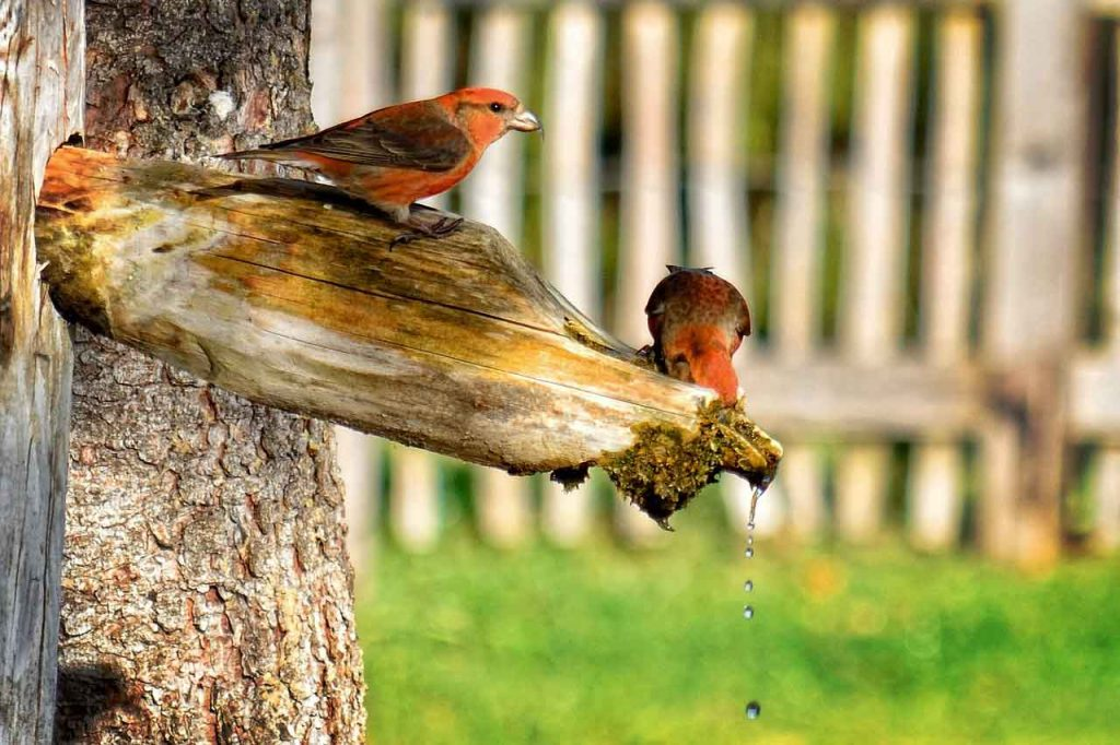 7 oiseaux d'automne à voir dans votre jardin
